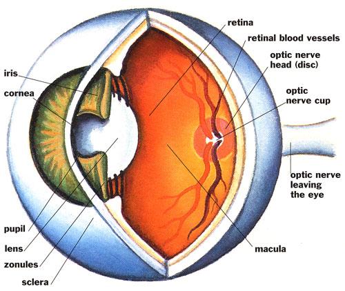 berwick family eyecare   glaucoma eye diagram of a complex a diagram of a hot air balloon of the density